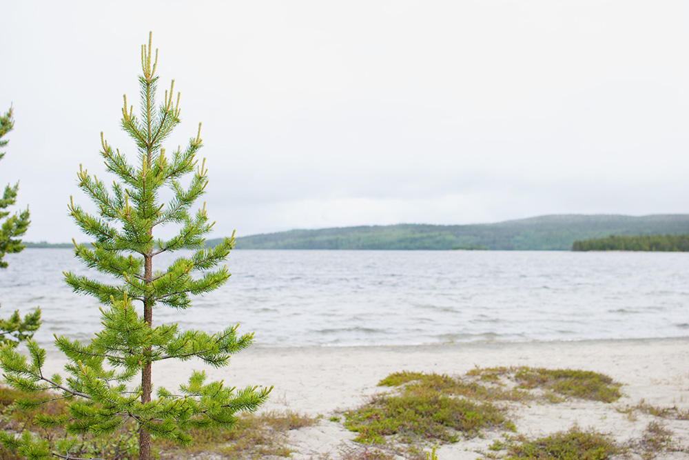Озеро Инариярви, у которого мы обедали. Финляндию называют страной тысячи озер, и это правда: там они на каждом шагу
