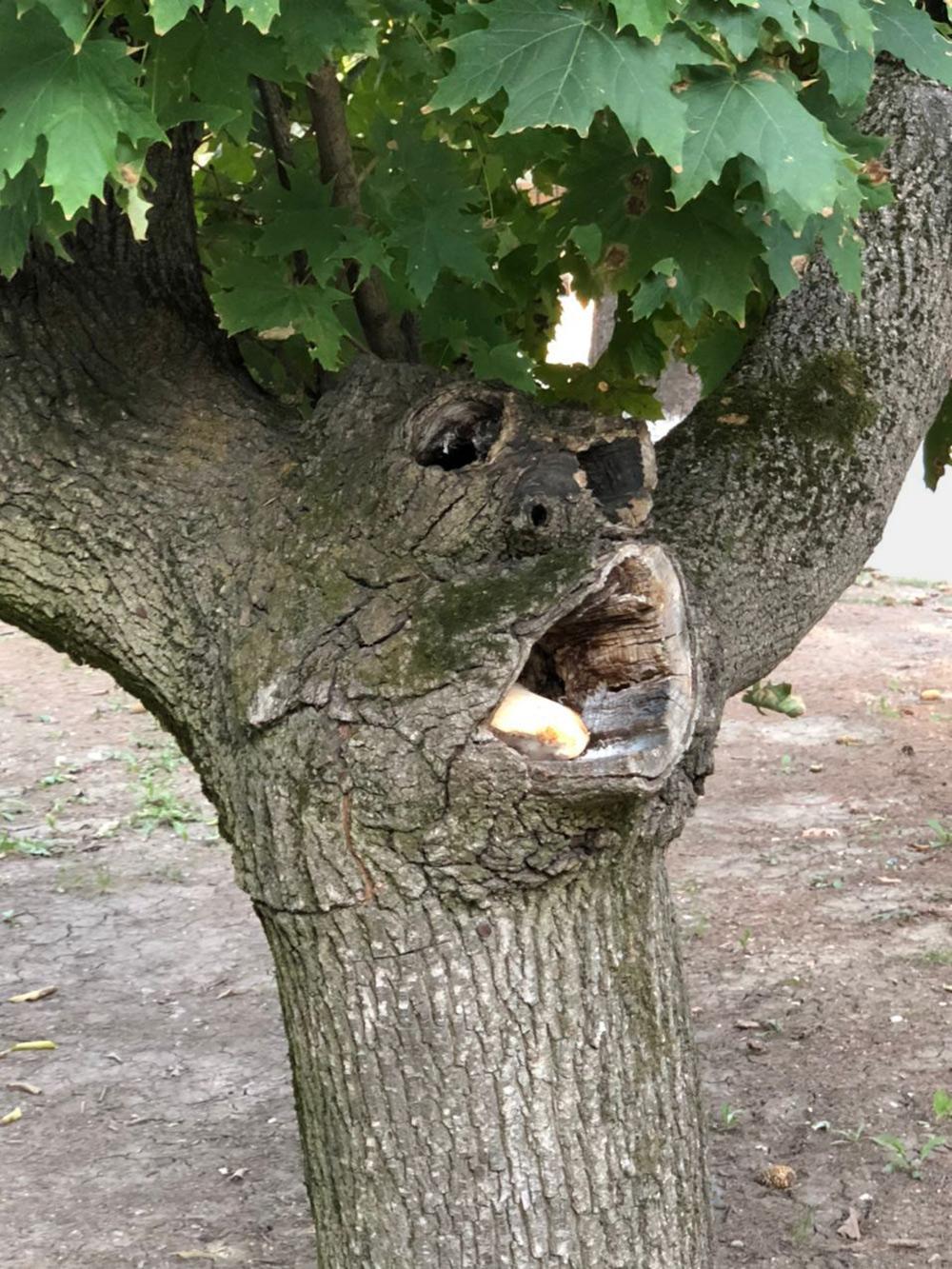 Кажется, деревья на территории санатория пытаются нам что-то сказать