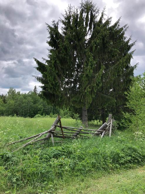 Покосившийся забор — чуть ли не единственные остатки человеческого присутствия в том месте, где дорога закончилась. Дальше — просто лес