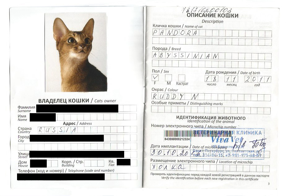 Загранпаспорт кота