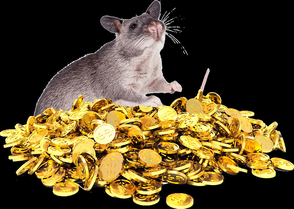 Гигантская крыса рассказала, сколько у нее денег