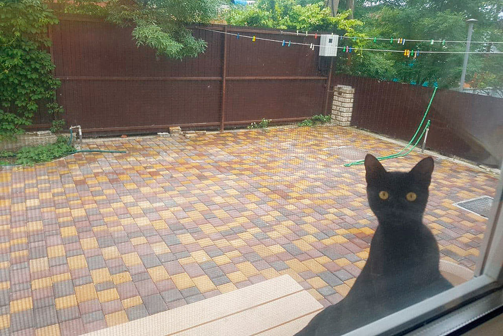 Коты тут — настоящие хозяева. Людям саллергией, наверное, непросто найти здесь жилье безкотов