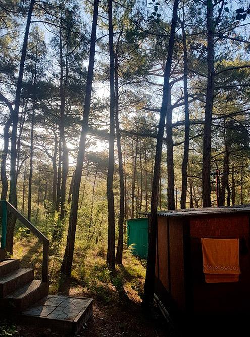 Летние домики в сосновой роще для меня как рай в шалаше