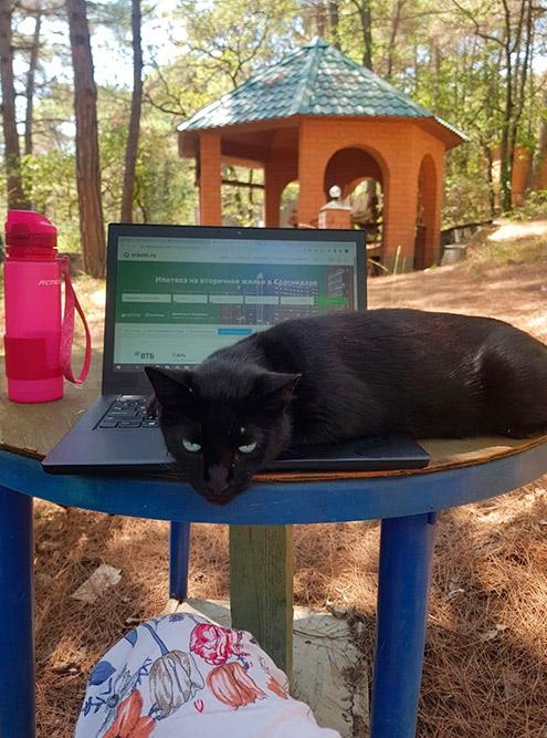 Ласковые коты и тут помогали работать