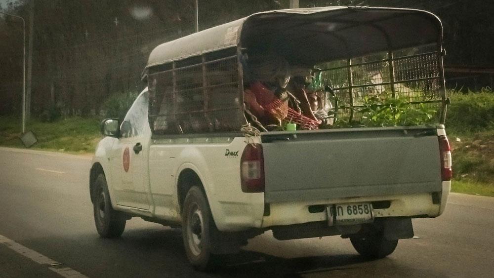 Однажды мы обогнали пикап, в кузове которого плавно покачивался гамак с человеком посреди рассады