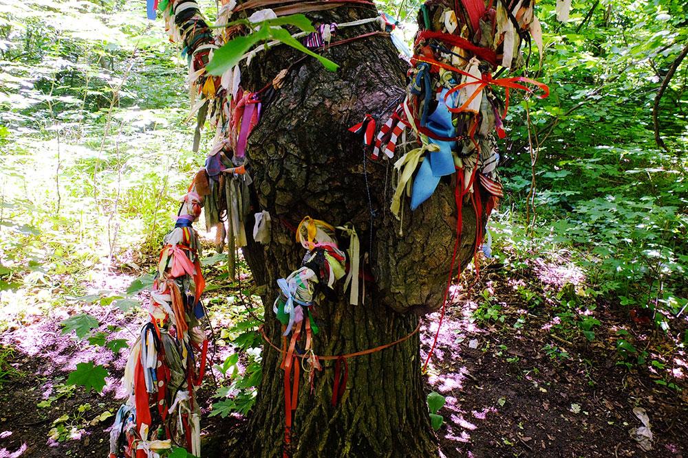 Ленточки, которые повязывают на деревья рядом с Ведьминым озером какбы на удачу. Надеюсь, они не вредят деревьям