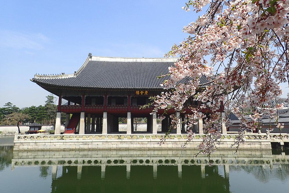 Цветущая сакура во дворце Кёнбоккун