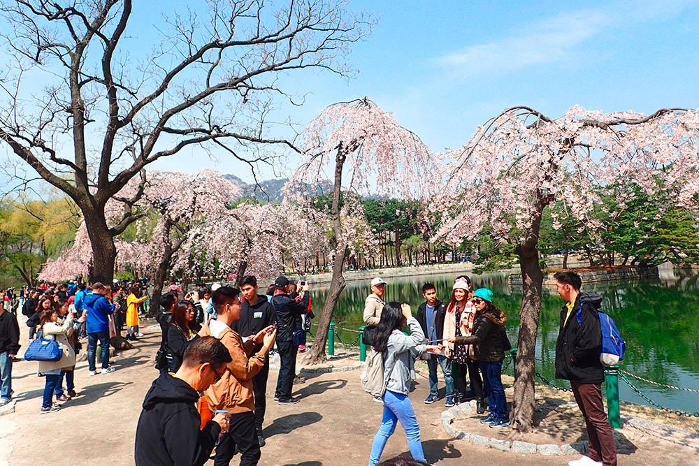 Посетителей в парках очень много. Нам пришлось ждать, пока группы туристов фотографировались на фоне пагоды и деревьев
