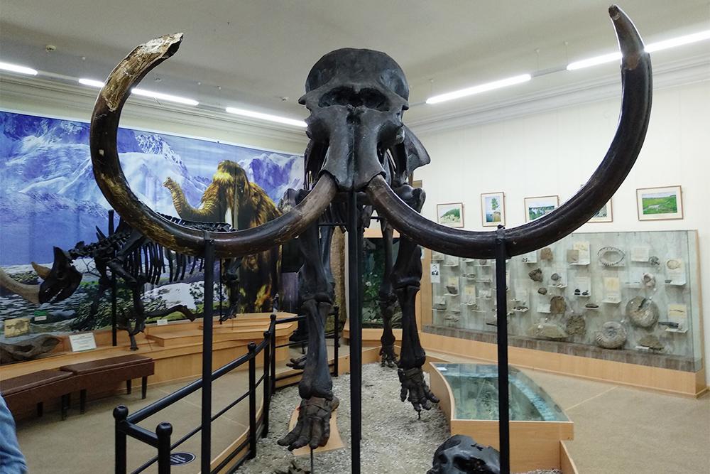 Это скелет мамонта, заним слева— скелет шерстистого носорога. Они черные, потомучто покрыты специальным консервантом. Мамонт жил примерно 30тысяч лет назад