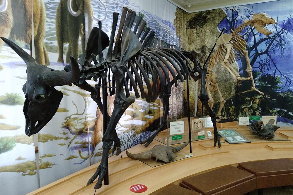 Аэто скелеты древнего бизона ипещерного медведя. Экспонаты нельзя трогать руками: они обработаны химикатами