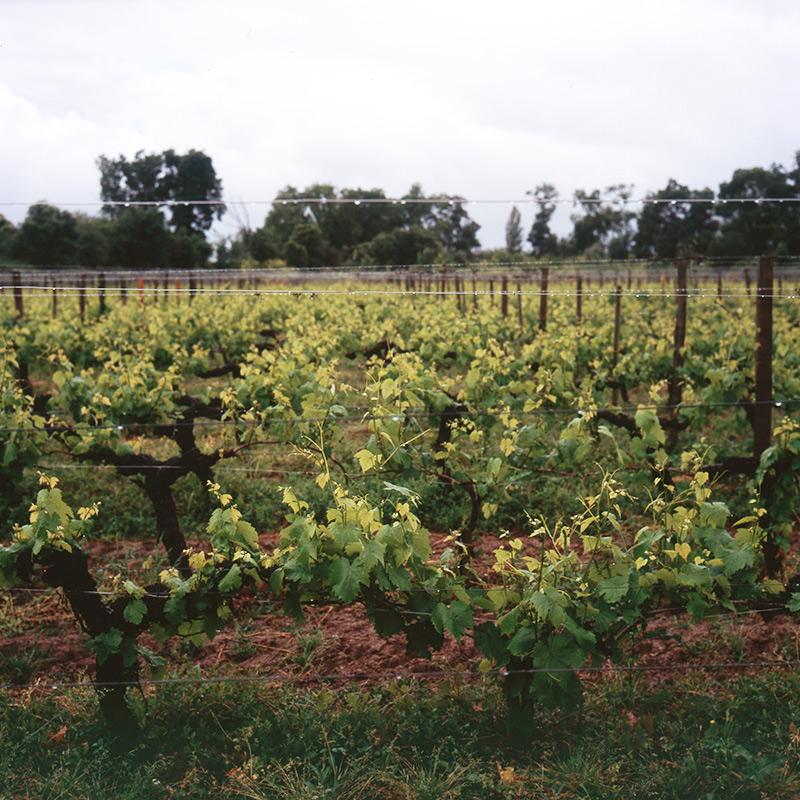 Шато д'Армайяк во Франции — это замок с виноградниками