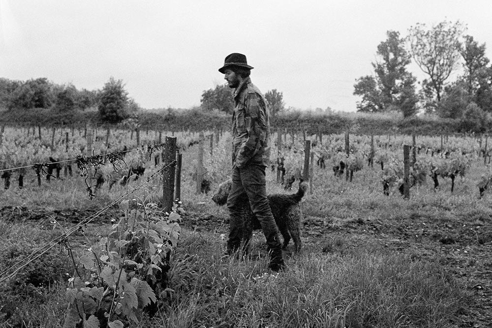 Я ездил в гости к французскому виноделу Пьеру. Его виноградник находится на острове в русле реки Гаронны около французского Бордо