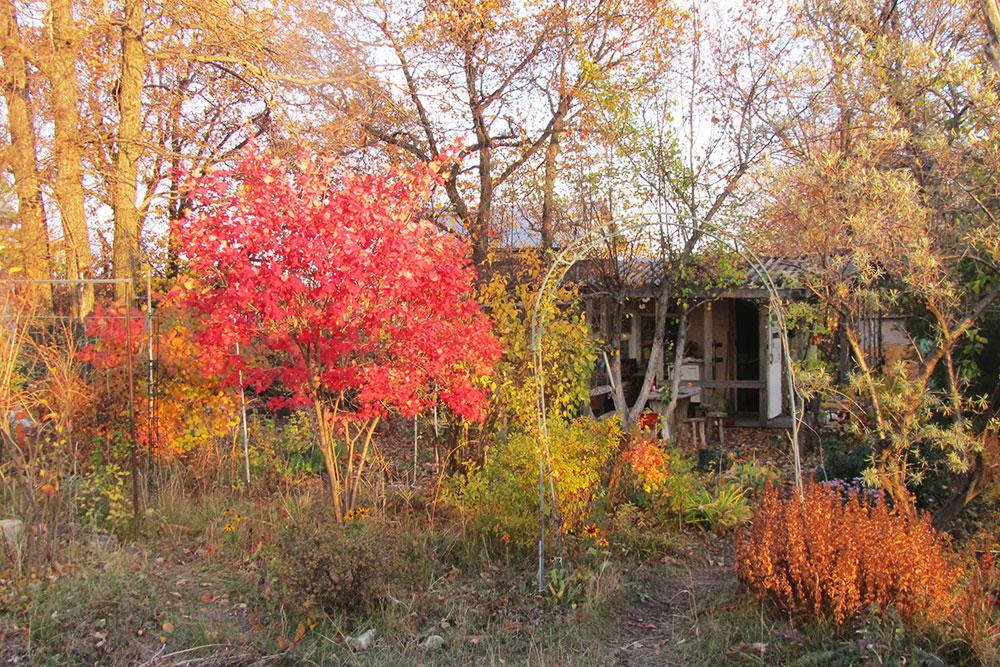 Вот мой земельный участок. На нем есть небольшой летний домик, три яблони, груша и абрикос. Мы приезжаем летом есть яблоки с виноградом и гулять