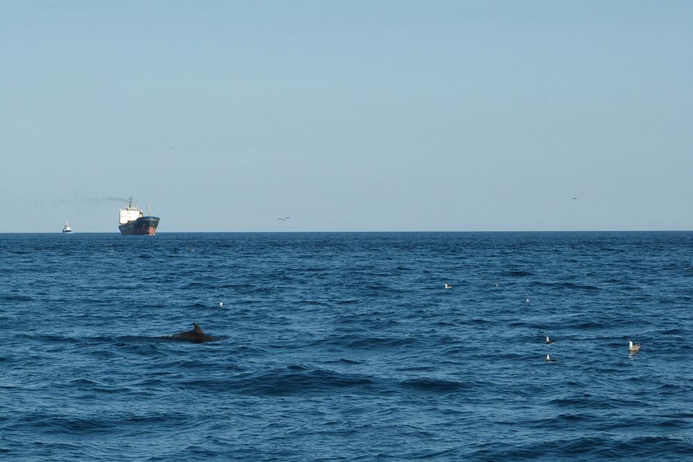 В другой раз посчастливилось: дельфины провожали нас до входа в Балаклавскую бухту
