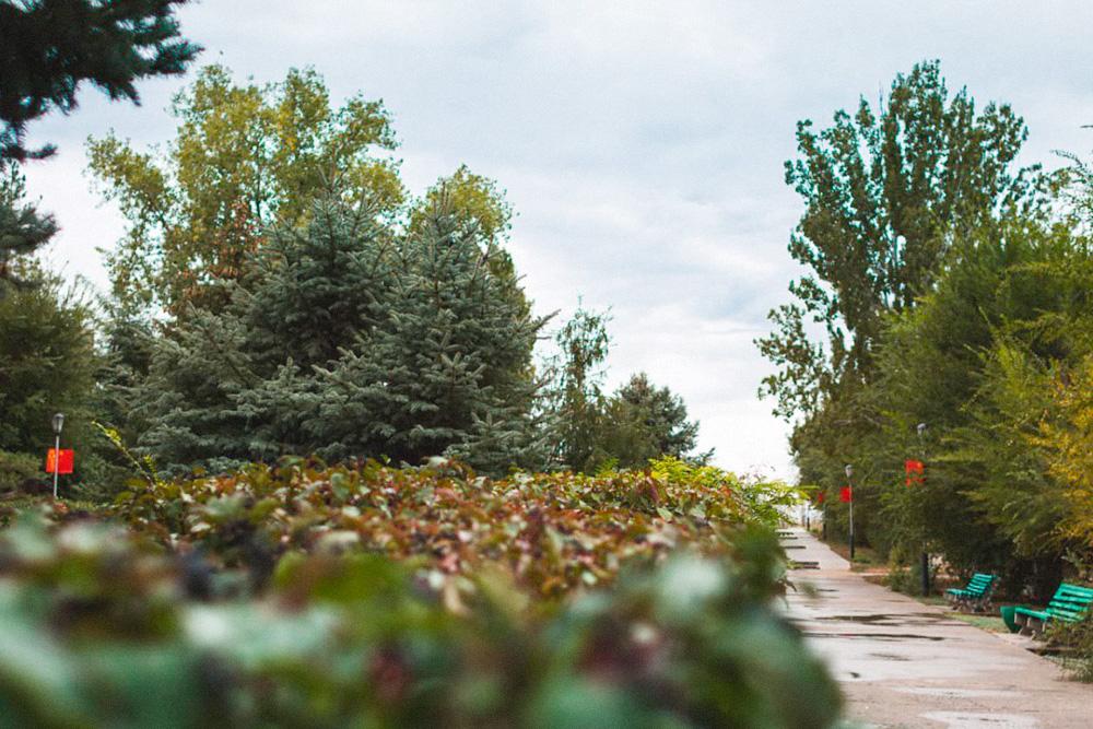 Аллеи в сквере мемориального комплекса. Фото: Владимир Поволоцкий