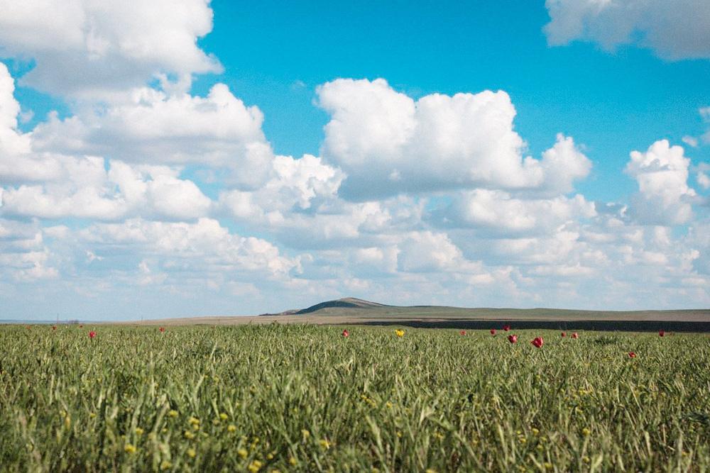 Тюльпаны и гора Большое Богдо. Фото: Владимир Поволоцкий