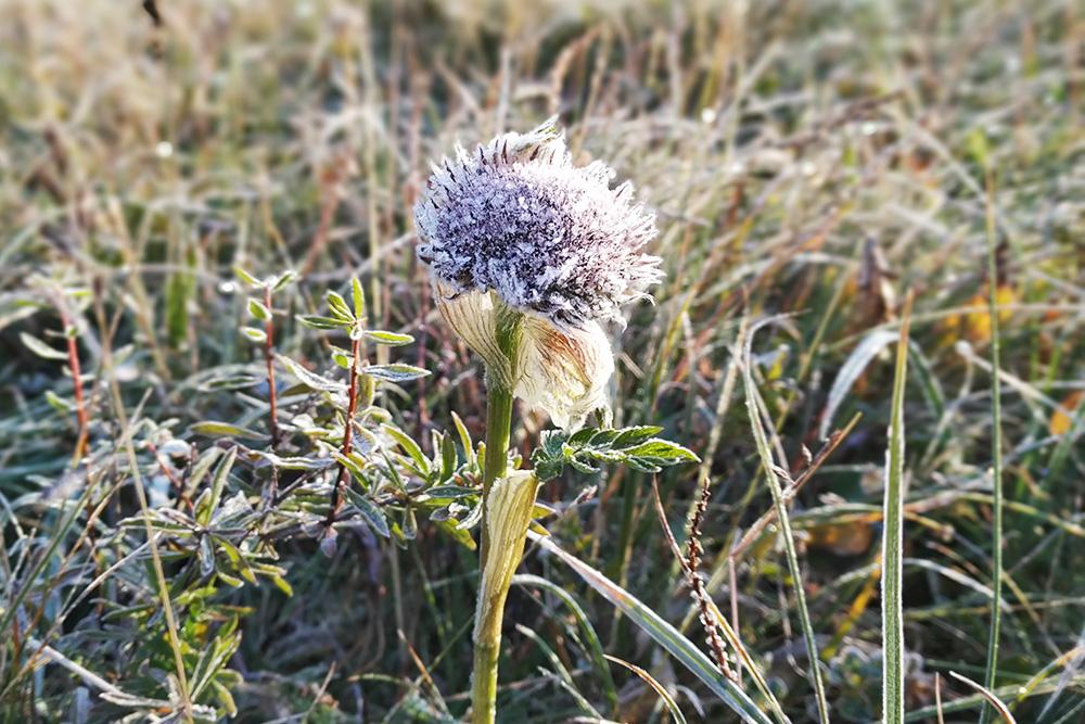 Утренний иней на траве
