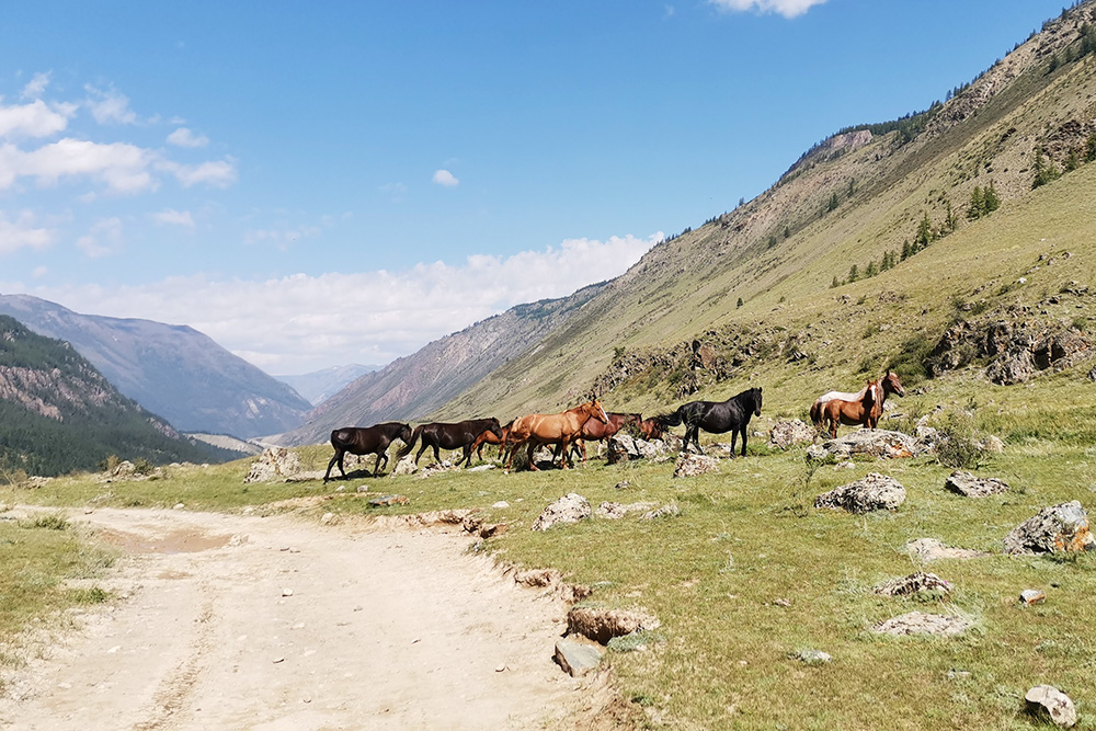 Местные алтайцы предлагают услуги по заброске вещей до озер на лошадях