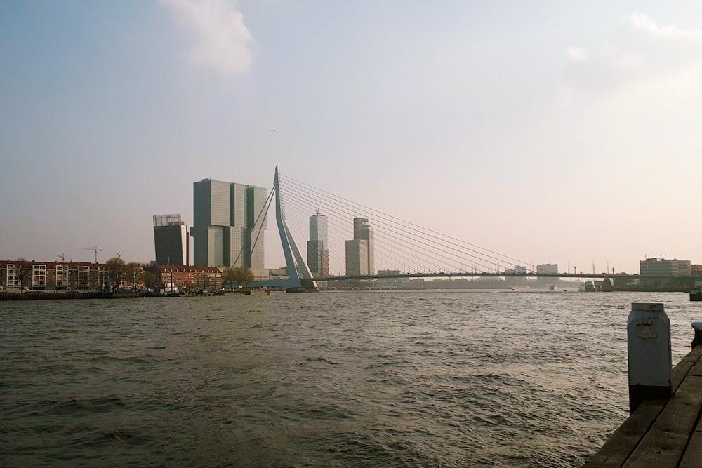 Мост Эразма в Роттердаме построен в форме лебедя