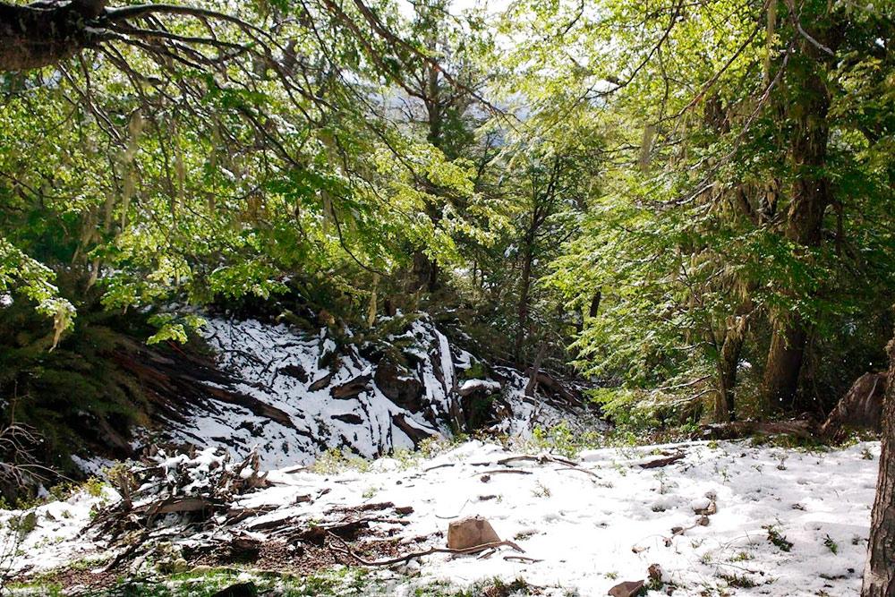 Весной в лесах еще кое-где лежит снег. Неподалеку от Сан-Мартин-де-лос-Андес находится горнолыжная станция, которая работает с июня по октябрь