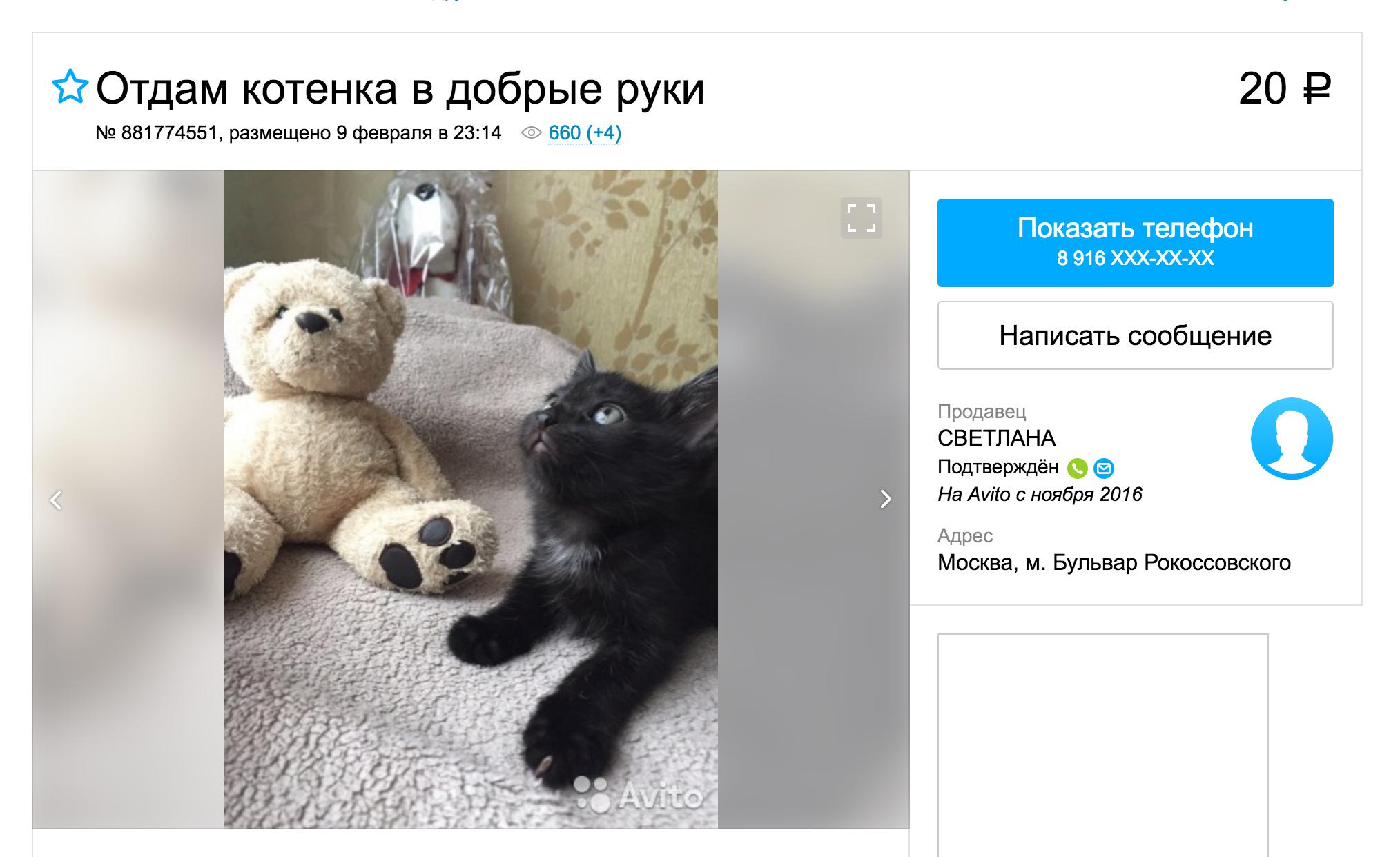 В интернете столько котят, что на всех не хватит добрых рук
