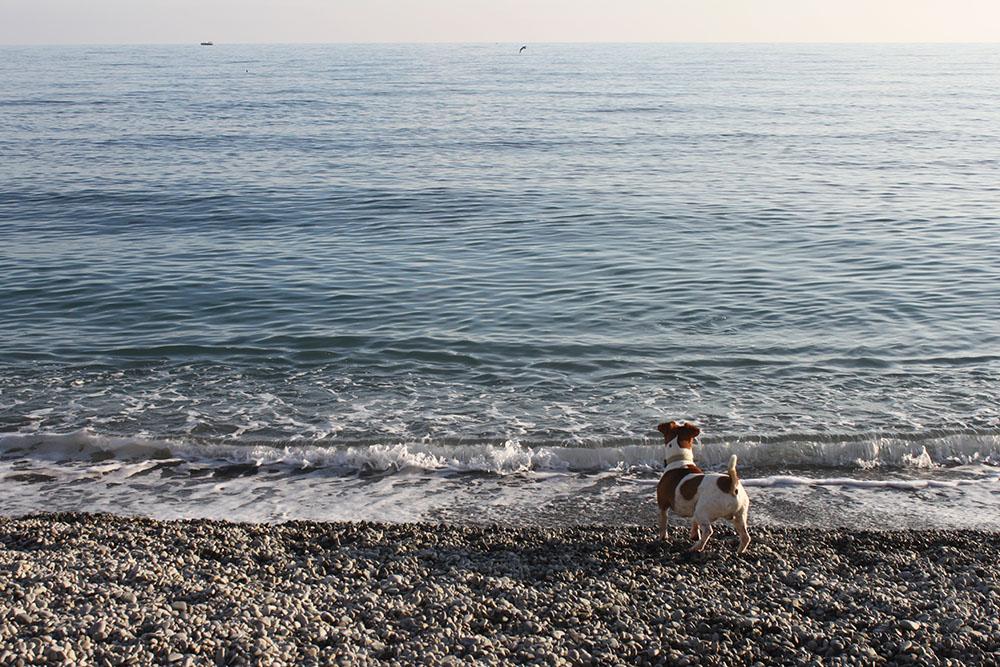 Мне нравится шуршащий звук, который издают волны на галечных пляжах