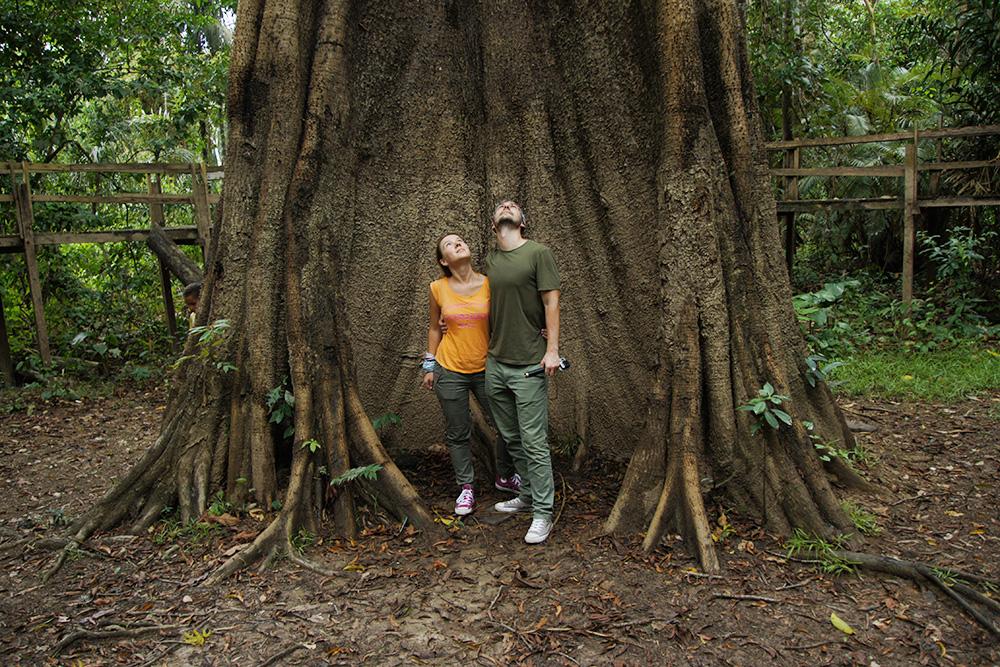 Самаума. Индейцы считают, что в этих деревьях находится душа тропического леса