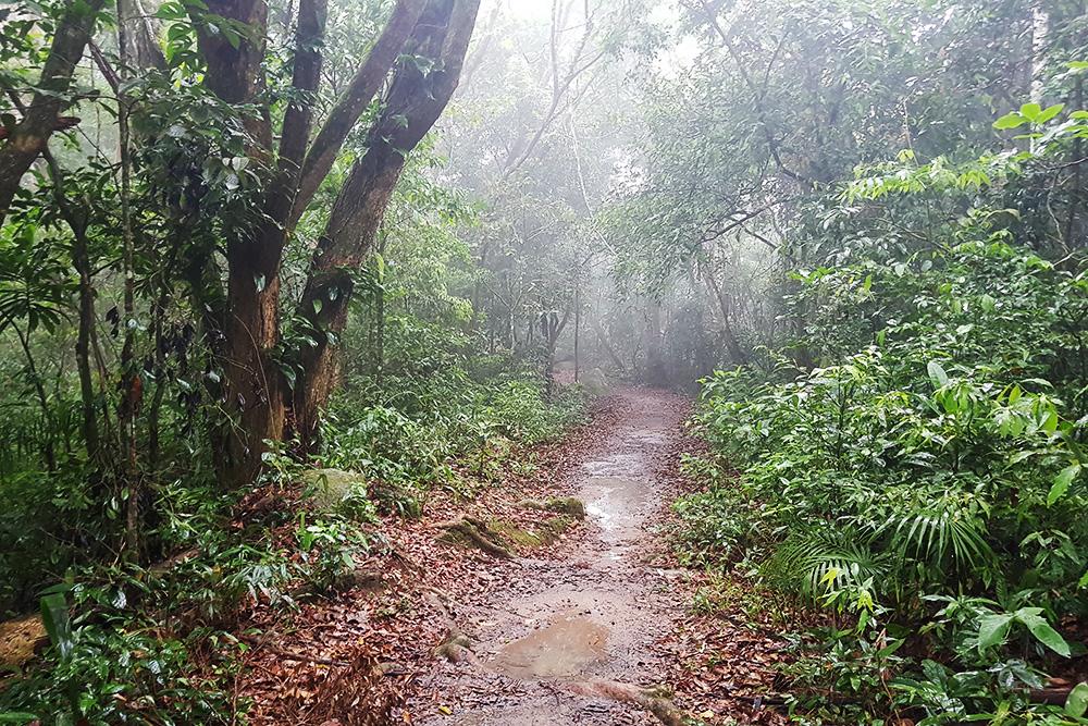 Тропический лес Илья-Гранди во время дождя