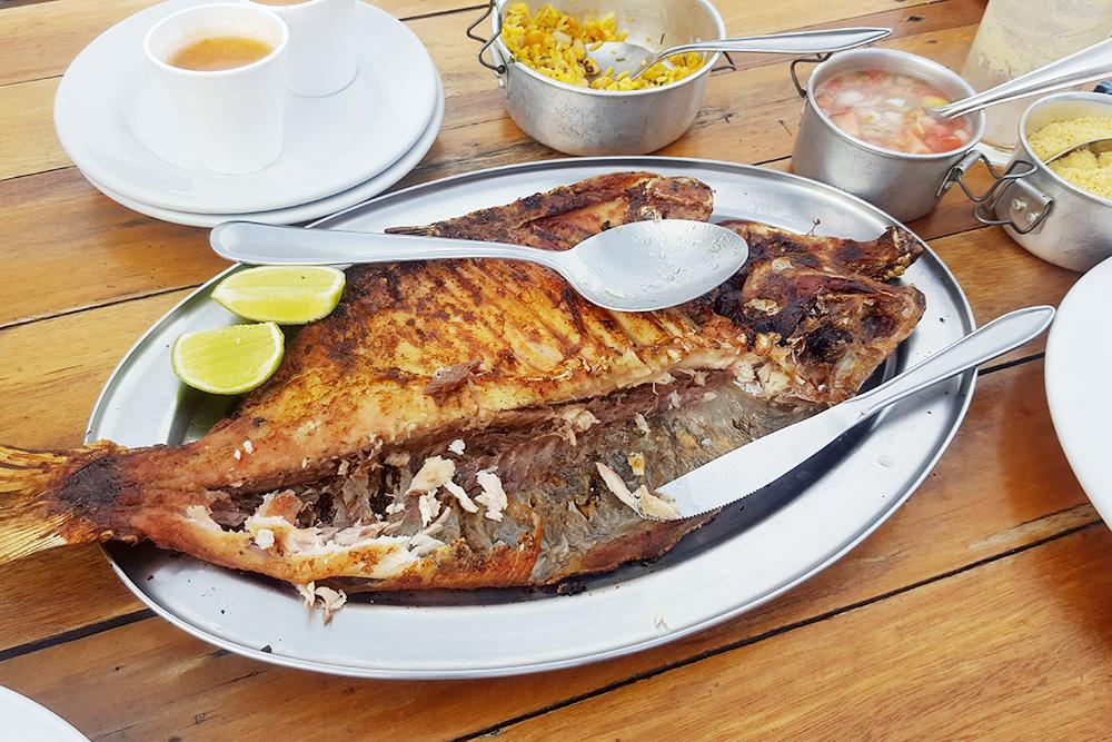 Бурый паку — крупная пресноводная рыба семейства пираньевых