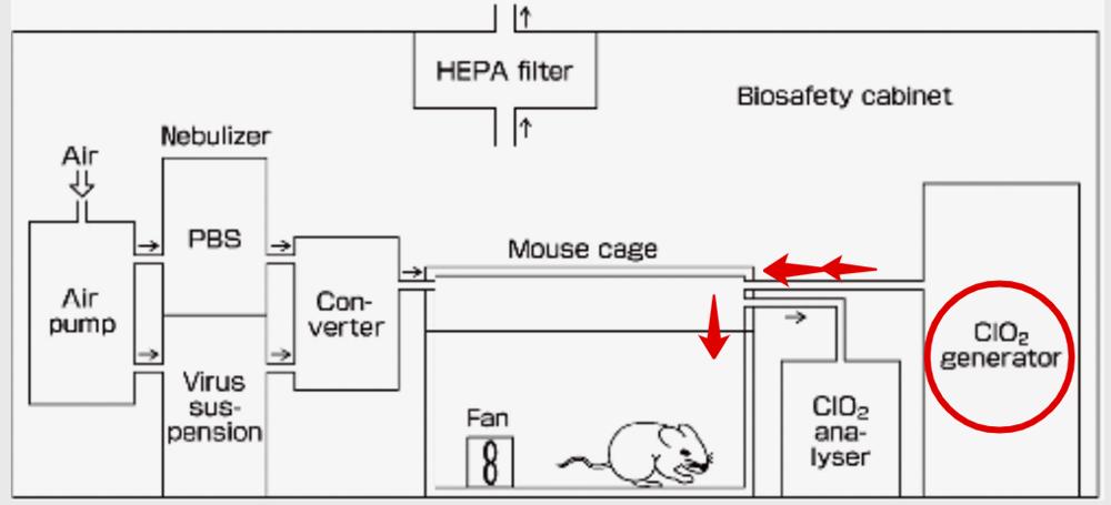 Красная стрелка показывает, что газообразный хлор из генератора поступает в мышиную камеру сверху и облако накапливается у мордочки животного. Источник: microbiologyresearch.org