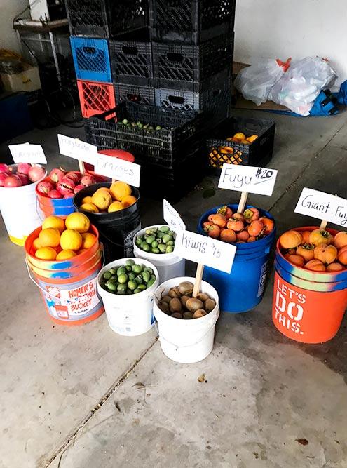 Фрукты можно собрать самому или просто купить на ферме