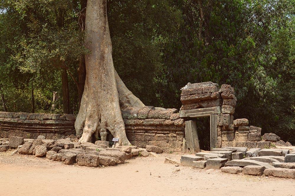 Удивительное сочетание тропической природы и древней кхмерской архитектуры