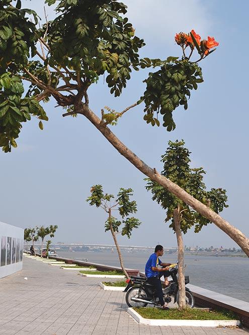 Современная набережная на реке Меконг в Пномпене, где цветут удивительные тропические растения