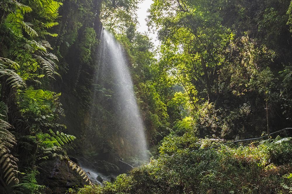 На территории заповедника есть большой красивый водопад Лос-Тилос и множество ручьев, которые питают буйную растительность