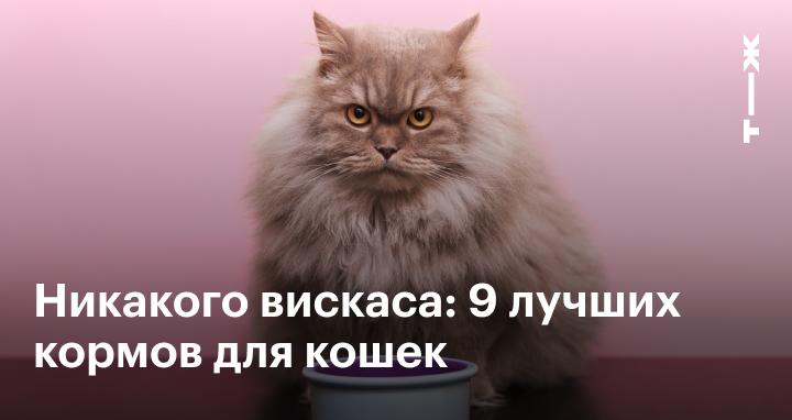 Хелп корм для кошки thumbnail