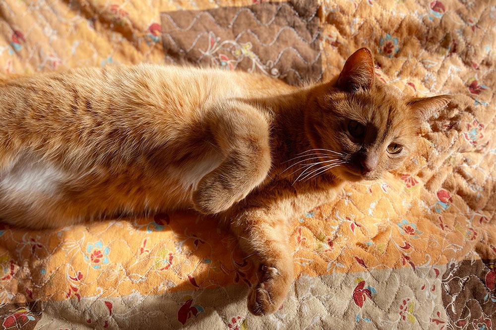 Фотографирую Лиса, который нежится на солнышке. Обожаю, обожаю этого кота!
