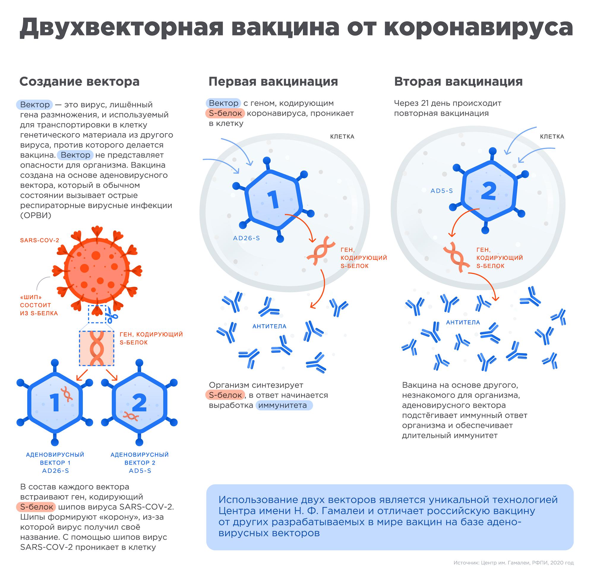 На официальном сайте вакцины объясняется, какработает «СпутникV»