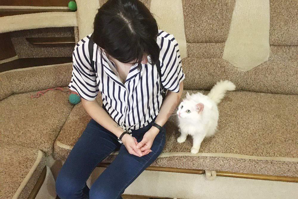 Большинство собак и кошек вприюте ласковые, сразу пытаются обратить насебя внимание