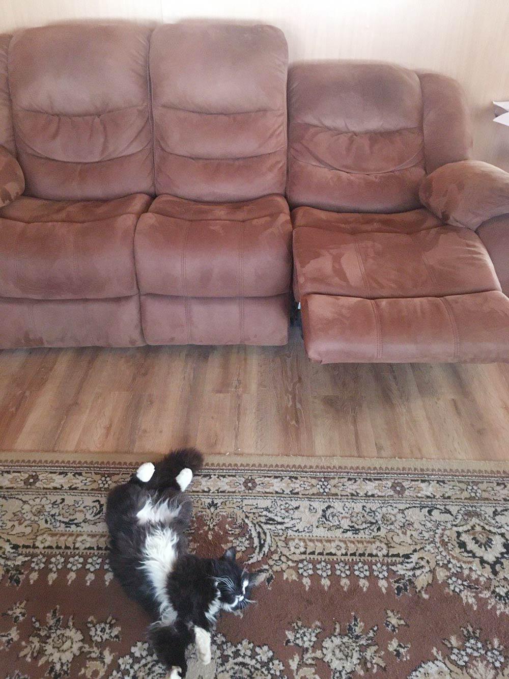 Наше место отдыха и кот