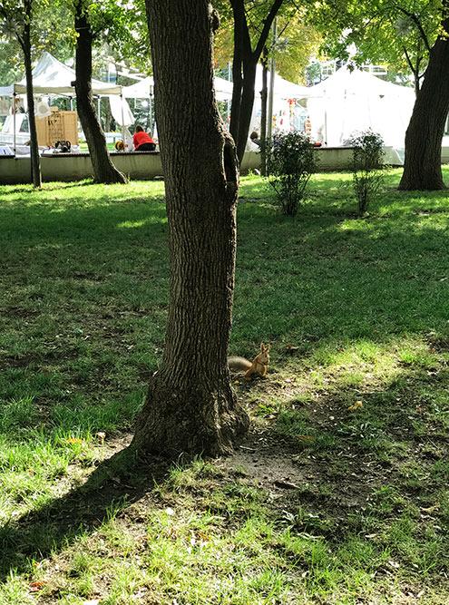 Парк приятный: аккуратные газончики, белочки, лебеди и сойки
