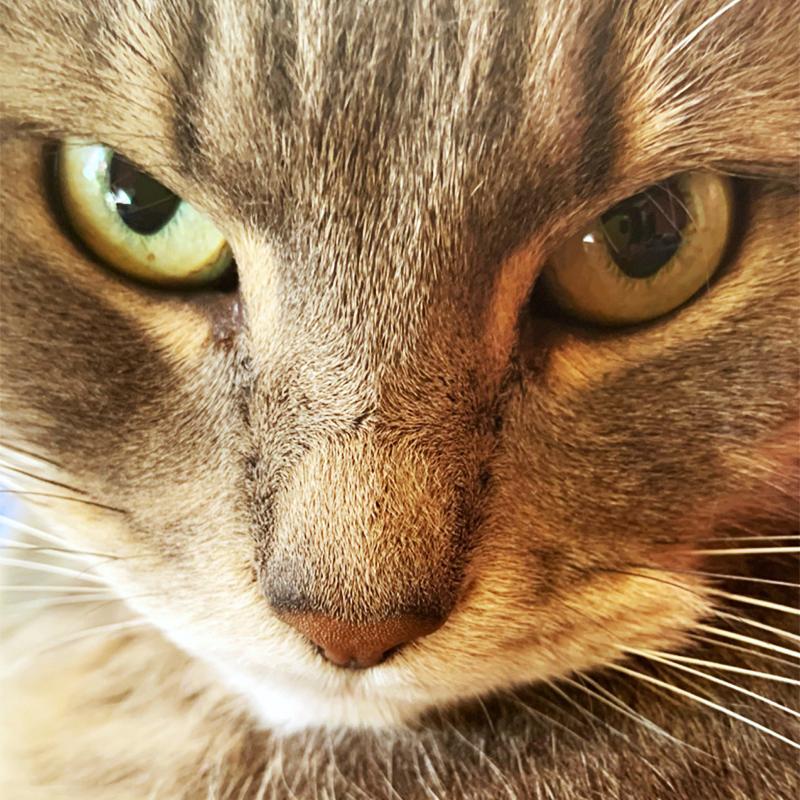Опять я отвлеклась, пронашего кота можно много чего рассказать