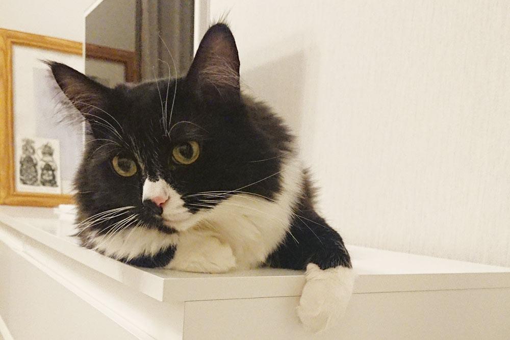 Благодаря нашему коту многие знакомые превратились в котопочитателей и котовладельцев, а до этого их ненавидели