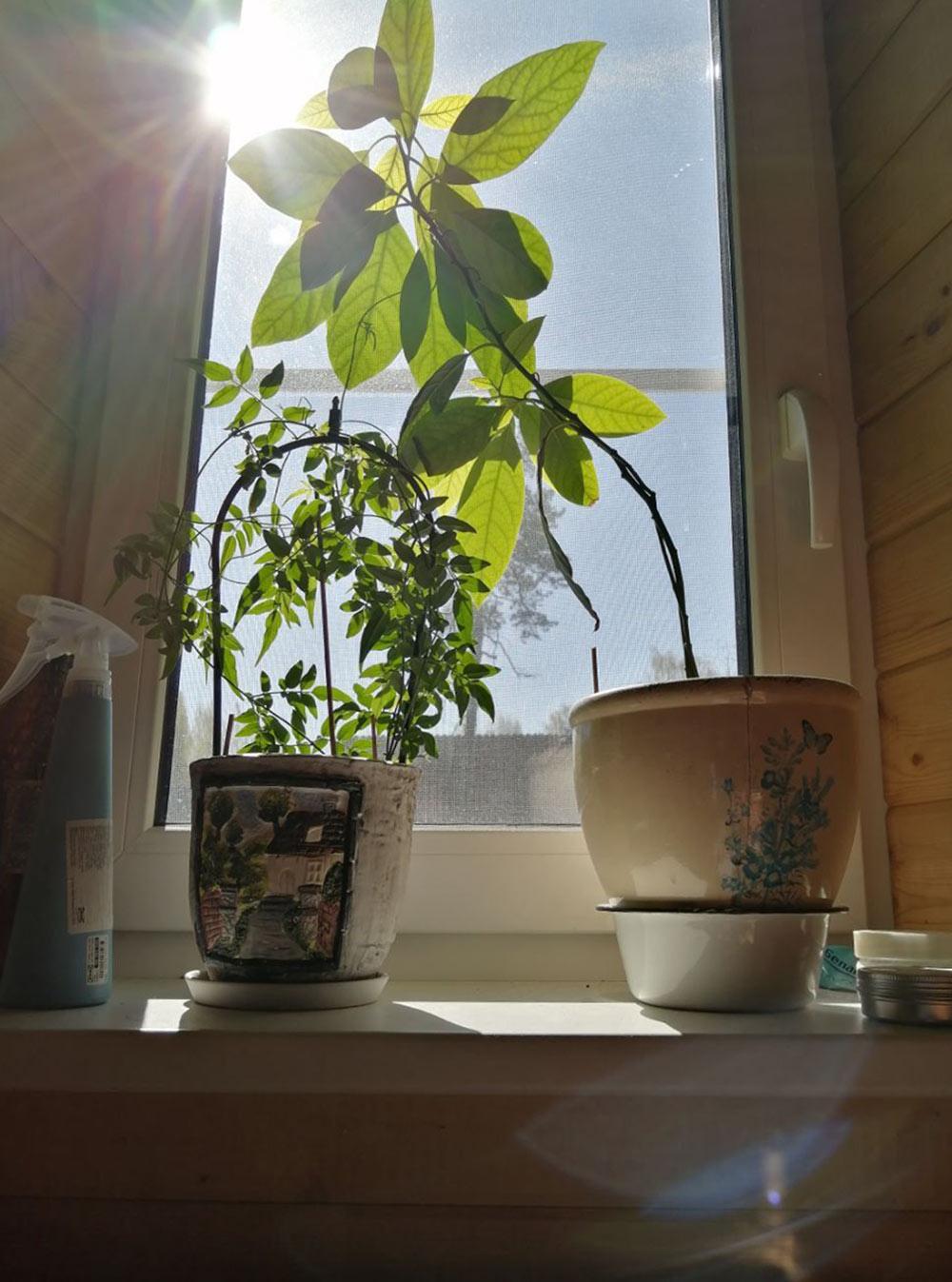 За окном поют птички, и солнце светит сквозь растущее на окне авокадо