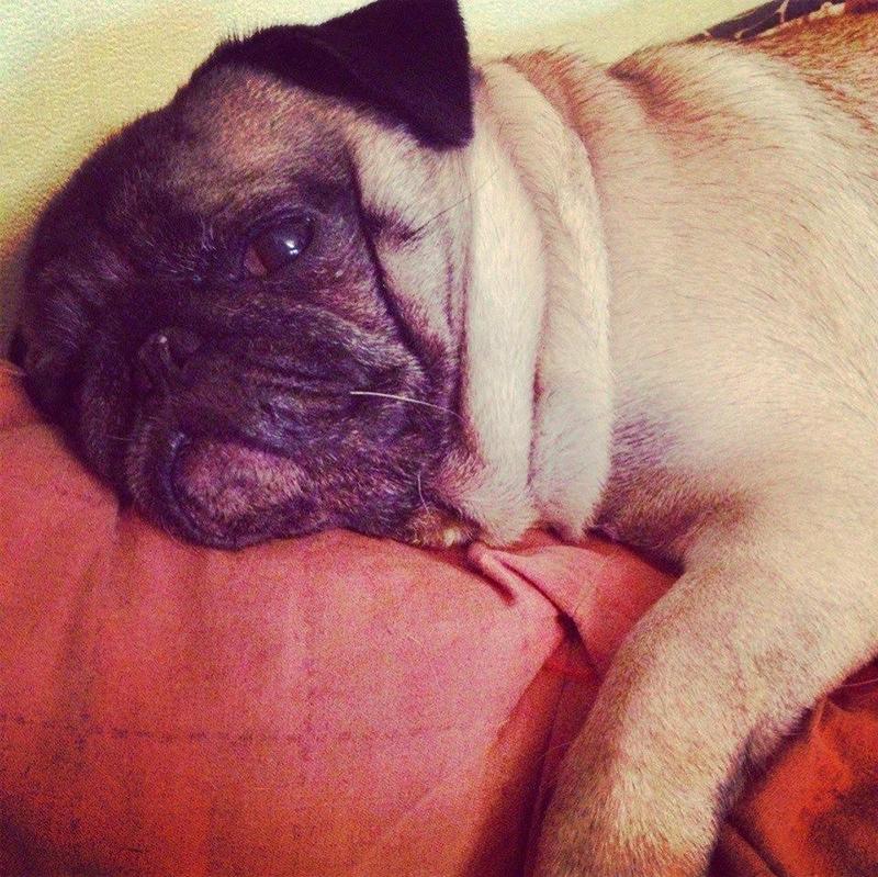 Собака, как и я, очень любит поспать