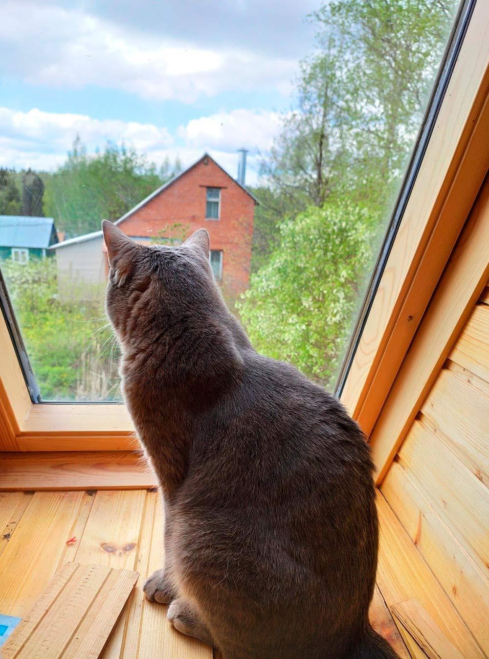 Котику нравится в деревне