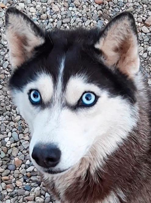 Это наша собака, ей 2 года