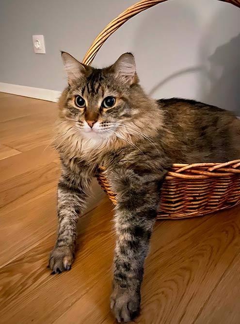 Это наша кошка. Я подобрала ее пять лет назад. Она так хорошо вписалась в наш с Н. быт, что мы не представляем, как жилибы безнее
