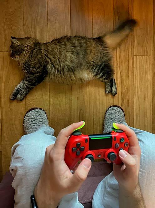У кошки любовь с Н. — не отходит от него ни на шаг