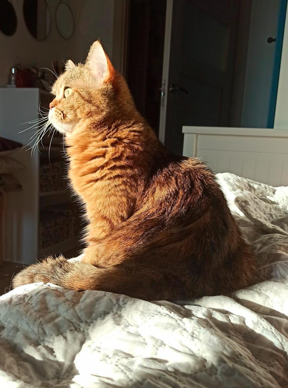 Моя очень серьезная кошка. Я рада, что она сегодня съела утреннюю порцию нового лечебного корма. Поначалу она ела его безособого аппетита