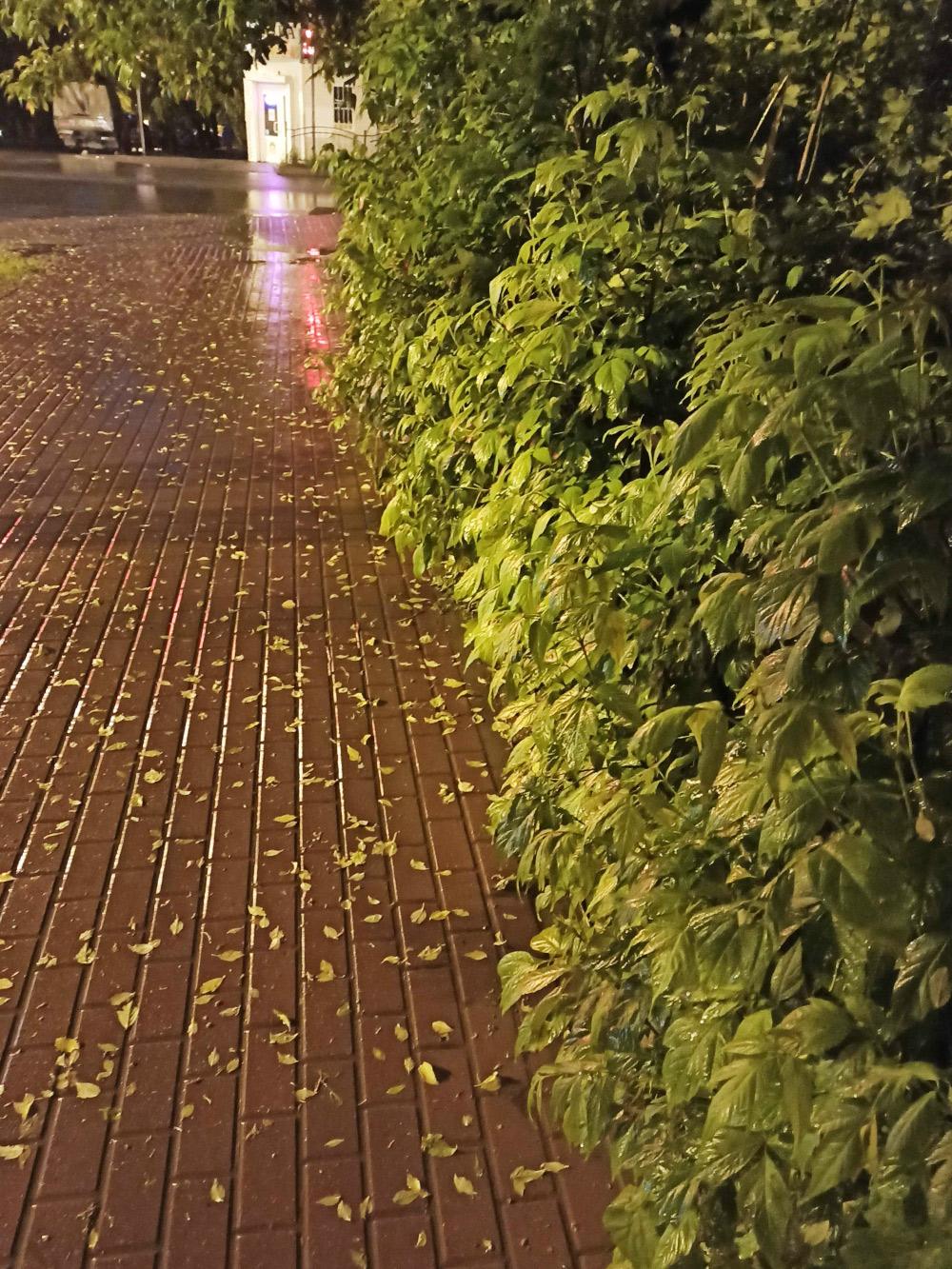 Приятно гулять вечером поддождем: улицы пустынные, воздух свежий, на душе умиротворение